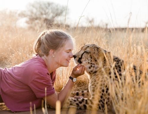 Liebe zu Geparden und Afrika Teil 1